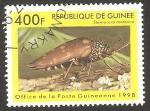 Stamps : Africa : Guinea :  sternocera castanea