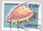 Stamps Ghana -  caracola