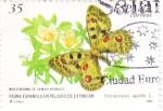 Stamps Spain -  fauna española en peligro de extinción-Parnassius apollo   (A)