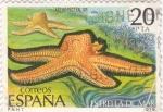 Stamps Spain -  estrella de mar      (A)