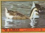 Sellos de Asia - Emiratos Árabes Unidos -  patos
