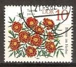 Sellos de Europa - Alemania -  Flores de otoño. Caléndulas francesas.DDR