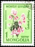 Sellos de Asia - Mongolia -  Flores de Mongolia. Begonia Evansiana.