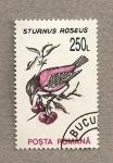Stamps Romania -  Sturnus roseus