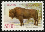 Stamps Europe - Belarus -  BIELORRUSIA -  Bosque de Belovezhskaya Pushcha / Bialowieza