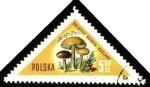Stamps Europe - Poland -  Hongos de Polonia, boletus scaber-kozlarz.