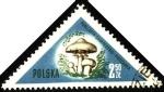 Sellos de Europa - Polonia -  Hongos de Polonia, Psalliota campestris-pieczarka.