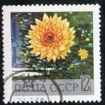 Sellos de Europa - Rusia -  Flowers.