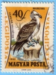 Stamps Hungary -  Pandion Haliaetus