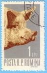 Stamps Romania -  Cerdo