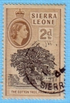 Stamps Africa - Sierra Leone -  The cotton tree