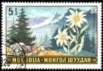 Stamps Asia - Mongolia -  Paisajes con flores leontopodium ochroleucum.