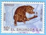 Stamps : America : El_Salvador :  Micoleón