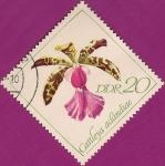 Stamps : Europe : Germany :  Orquideas, Cattleya aclándiae