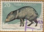 Sellos de America - Cuba -  PECARI