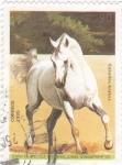 Stamps Cuba -  Caballos Arabes