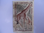 Stamps of the world : Cameroon :  Girafes - Camp de Waza.-Rep.Federale Du Camerun.