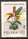 Stamps Poland -  Orquídeas