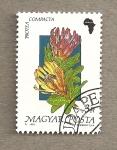 Stamps Hungary -  Flora africana