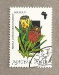 Sellos de Europa - Hungría -  Flora africana