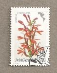 Sellos de Europa - Hungría -  Flora americana