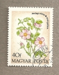 Stamps Hungary -  Rosa gallica