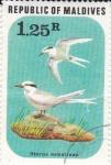 Stamps Maldives -  Sterna Sumatrana