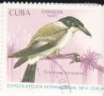 Sellos de America - Cuba -  Gracticus Torquatus
