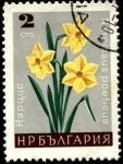 Sellos de Europa - Bulgaria -  Narcissus poeticus.