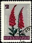 Stamps Bulgaria -  Digitalis purpurea.