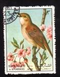 Sellos de Asia - Emiratos Árabes Unidos -  serie- Aves
