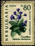 Stamps Bulgaria -  Flores, haberlea rhodopensis. .