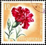 Stamps Europe - Albania -  Flores multicolores, dianthus caryophyllus.