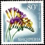 Sellos de Europa - Albania -  Flores multicolores, freesia hybrida.