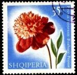 Sellos de Europa - Albania -  Flores multicolores, paeonia chinensis.