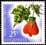Stamps : Europe : Albania :  Flores multicolores,  abutilon striatum.