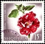 Stamps : Europe : Albania :  Flores multicolores, althaea rosea.