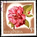 Stamps Albania -  Flores multicolores, camelia williamsi.