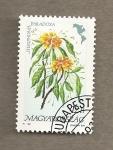 Stamps Hungary -  Steriphoma paradoxa