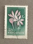 Sellos de Europa - Hungría -  Cochicum arenarium