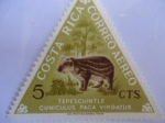 Stamps of the world : Costa Rica :  Tepescuintle Cuniculus Paca Virgatus (Guartinaja)