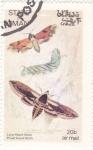 Sellos de Asia - Omán -  Mariposas y larvas - Hawk Moth