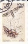 Stamps Oman -  Mariposas y larvas -Pine Hawk Moth