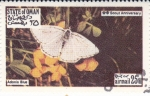 Sellos de Asia - Omán -  Mariposas -Adonis Blue