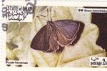 Sellos de Asia - Omán -  Mariposas -Hairstreak