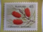 Sellos de Oceania - Australia -  Callistemon  Teretitolius- Flor- (AJ-419)