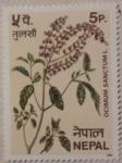 Stamps Nepal -  cocimum sanctum l. 1980