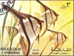 Sellos de Asia - Emiratos Árabes Unidos -  peces