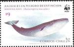 Stamps America - Chile -  BALLENA AZUL - ANIMALES EN PELIGRO DE EXTINCION