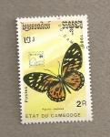Stamps Asia - Cambodia -  Mariposa Papilio zagreus